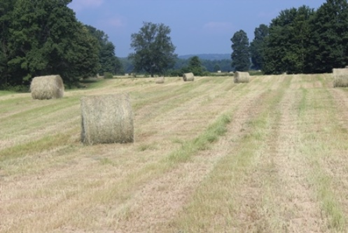 just been baled